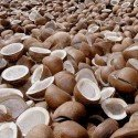 Dry Coconut (Gola)