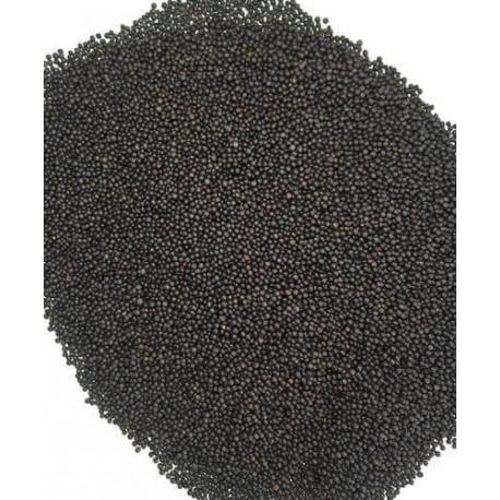 rai-seeds